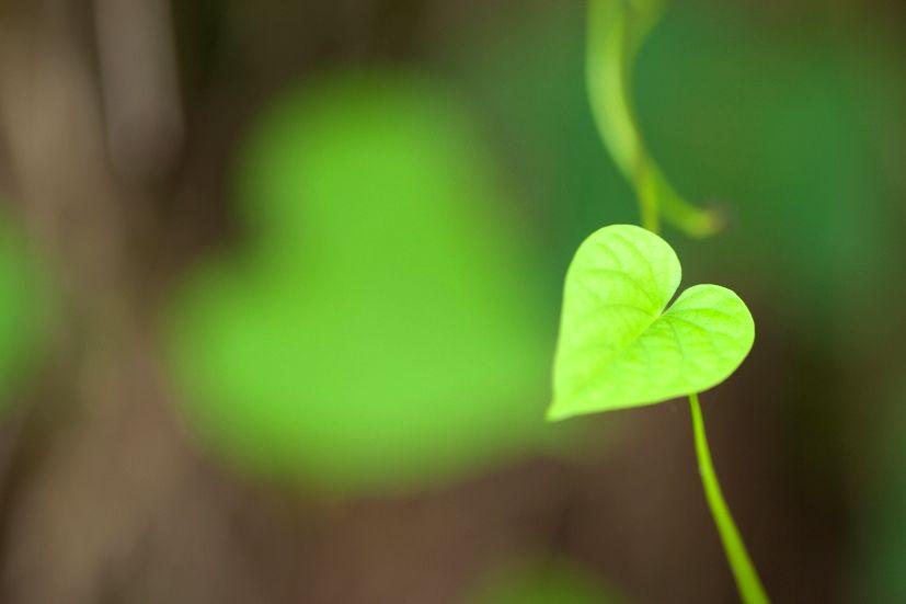 Uma pequena folha em forma de coração: tal como os desenhos da natureza, os caracteres japoneses têm uma simbologia associada | Foto: Vinoth Chandar/Creative Commons